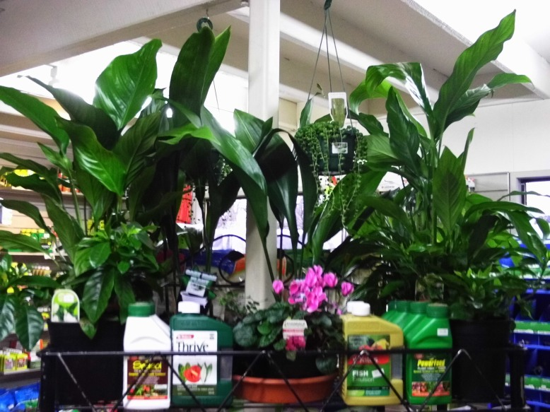New range of House plants now in store