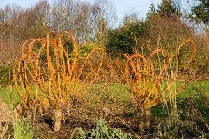 Willow-sculptures-in-winter_940x627