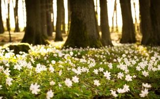 dream-spring-2012-primavara-in-padure_2560x1600_96738