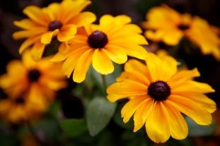 Autumn_flowers_(10376232316)