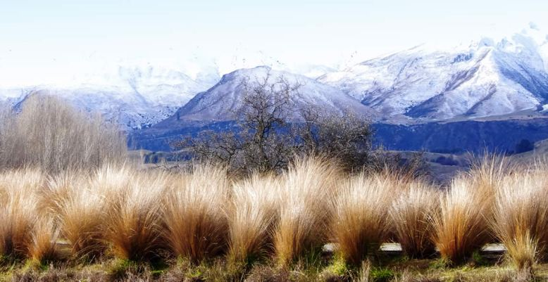 native-flora-for-july-queenstown-blog-1